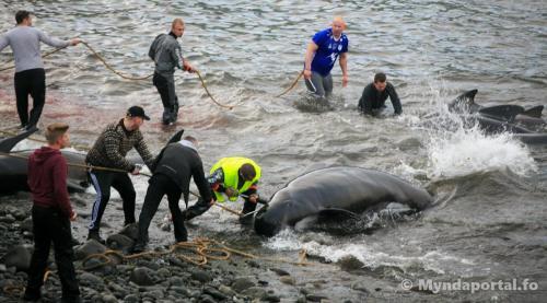 grind Borðoyavík 30062018-5-1