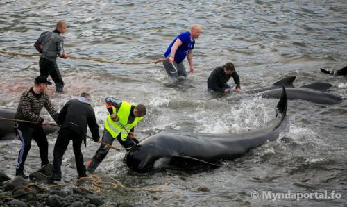 grind Borðoyavík 30062018-4-1